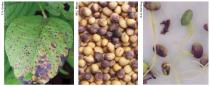 sementes-certificadas-soja-basf.png